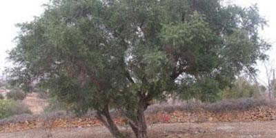 Nutti Natural Argan Oil